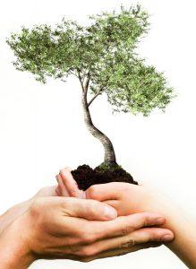 nurture tree white